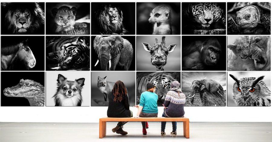 Stampa le tue foto in qualità fine art. Scopri il laboratorio photogem.it